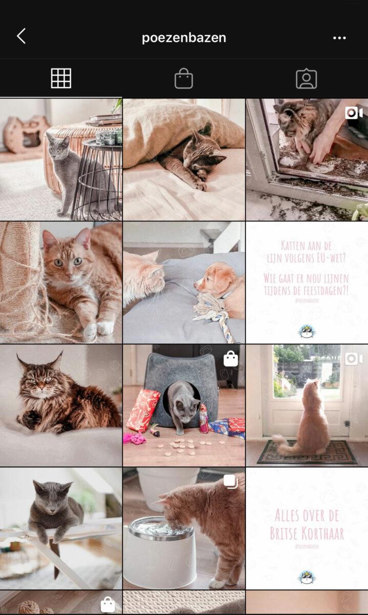 Instagram feed Poezenbazen mobiel